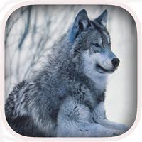 Wolf Hunter Challenge 2016