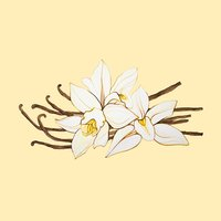 Vanilla Wallpapers Backgrounds HD for cool screen