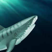 3D Killer Shark Attack Simulator