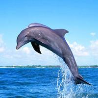 The Marine Mammals Encyclopedia