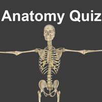 Anatomy Quizzes