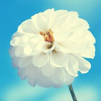 Flower Wallpaper – Floral Wallpapers & Backgrounds
