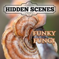 Hidden Scenes - Funky Fungi