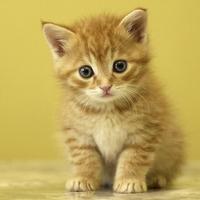 Cute Animals - Aww!