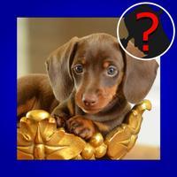 Top Dog Breed Quiz Maestro