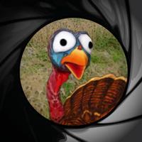 Jive Turkey Shoot