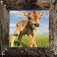 Farm Animals Name and Sound