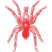 Spider Sticker Pack!