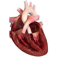Virtual Reality(VR) Human Heart