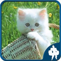 Cats Jigsaw Puzzles - Titan