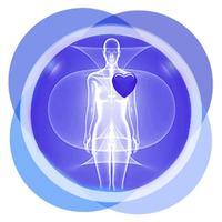 Anatomy Human Body Organs