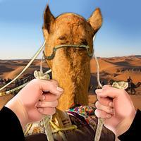 Drive Camel Simulator
