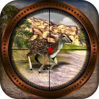 Wild Hunter Field 3D
