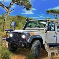 Offroad Driving wild safari strike animal hunting