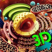 3D Cell +