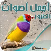 أجمل أصوات الطيور والعصافير