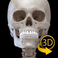 Skeleton 3D Anatomy