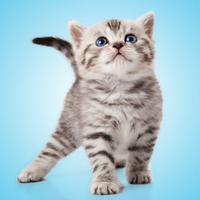 Kitten Sounds!