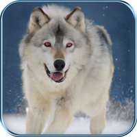 Wild Hunt : Snow World
