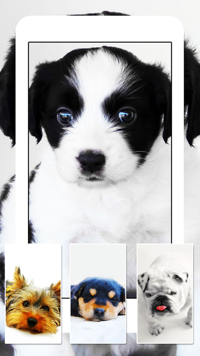 Dogs And Puppies Dog Wallpapers Cute Animal Backgrounds