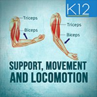 Support, Movement & Locomotion