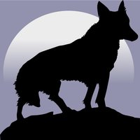 Wolf Survival Adventure 3D