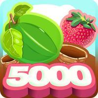 Berry 5000 - fruit crush