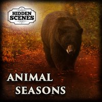 Hidden Scenes - Animal Seasons