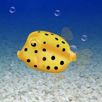 Boxfish simulation game