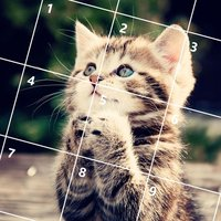 Cute Cats Jigsaw Puzzles