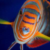 Oasis Aquarium Ltd