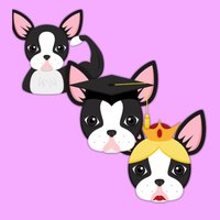 Boston Terrier - Brawn Brains Beauty