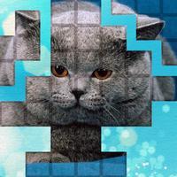 PicPu - Cat Picture Puzzle