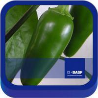 BASF México -  Cultivo del Chile