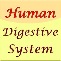 Human Digestive System Guide