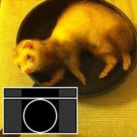カメラWeb
