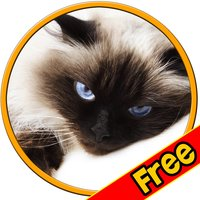 prodigious cats for kids - free