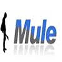 Mule 뮬 - 중고악기 매매 장터