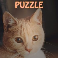 Merged Hex _ Cute cats party and simple type of the 2048
