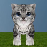 My Dear Kitty