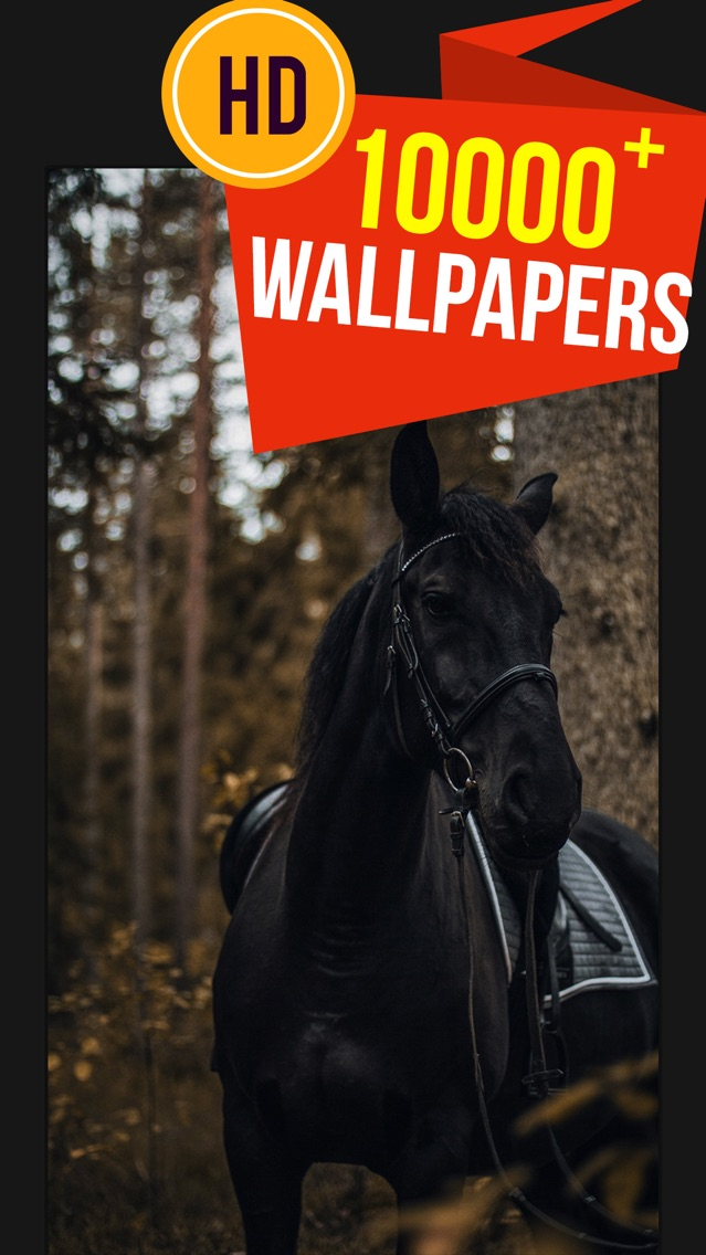 Beautiful Hd Horse Wallpapers App For Iphone Free Download