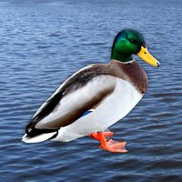 Quack - Duck Soundboard
