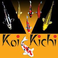 Koi Kichi