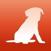 Wallfive HD Wallpapers - Cute Puppies