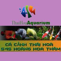 Cá Cảnh Thái Hoà