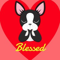 Looking Forward to Blessings - Boston Terrier