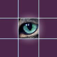 Eyes Test Animals