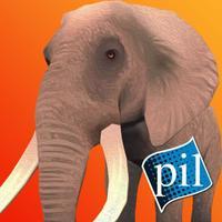 PI VR Animals