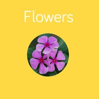 Flowers Flashcard for babies and preschool