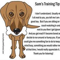 Learning for dog training premium